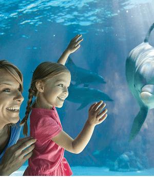 FREE SeaWorld Teacher Fun Card + 3 FREE Single Day Tickets (Teachers in AZ & CA)