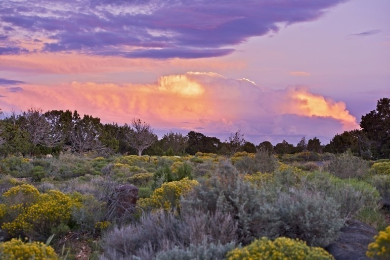 Arizona wildflowers bloom from March to May - here's a list of the BEST places to see the desert wildflowers in Arizona!  #arizona #wildflowers #desert #desertbloom