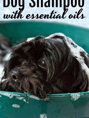 DIY Foaming Non-Toxic Dog Shampoo with Essential Oils