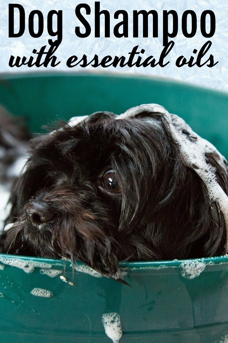 This homemade dog shampoo with essential oils is a wonderful alternative to commercial dog shampoos that can contain a myriad of chemicals. It's SO easy to make and is incredibly effective!