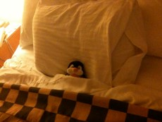 Pengee tucked into bed