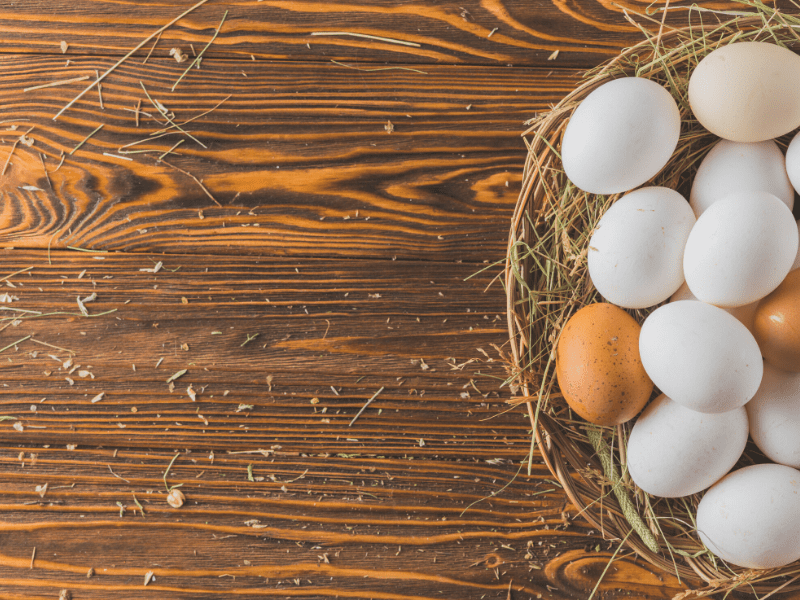Eggs - A Protein Food Source