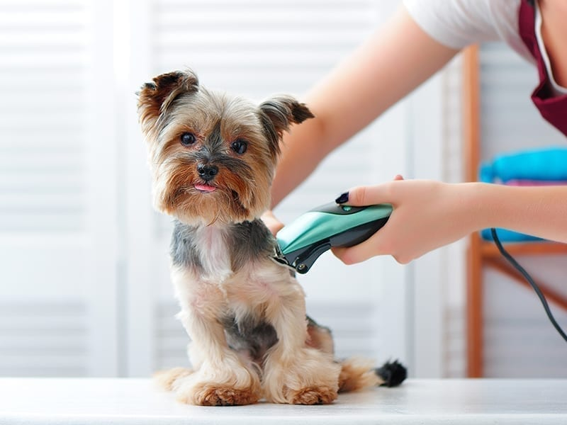 How To Keep The Frequency Of Dog Grooming In Check