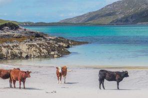 The Isle of Vatersay