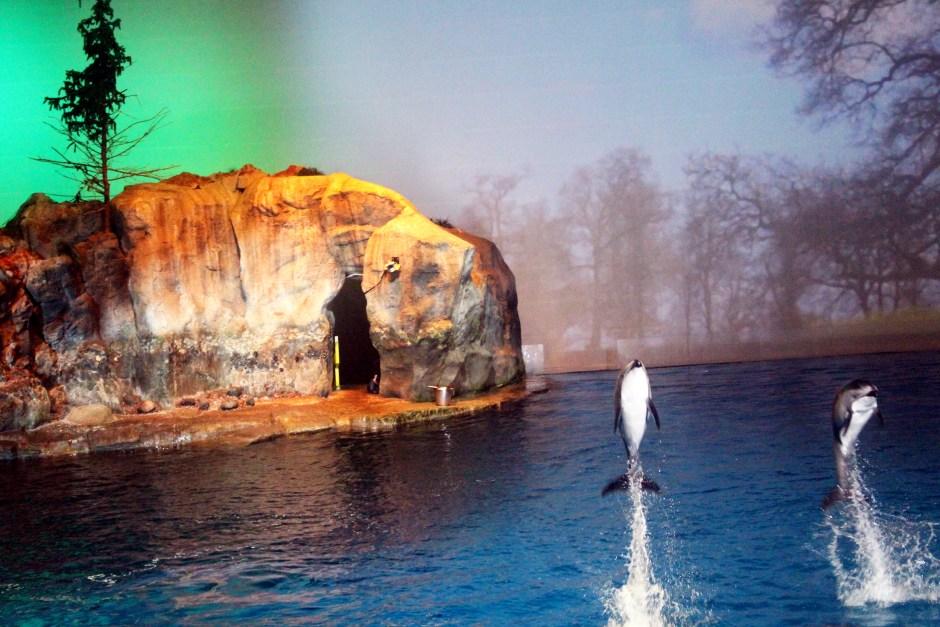 Shedd Aquarium BLU Frog Wild