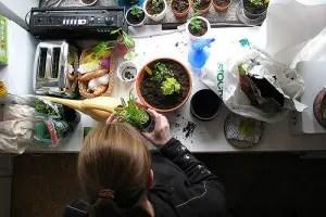 How To Create An Apartment Garden – Be An Urban Gardener