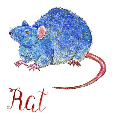 Rat  Horoscope 2020 & Feng shui  Predictions