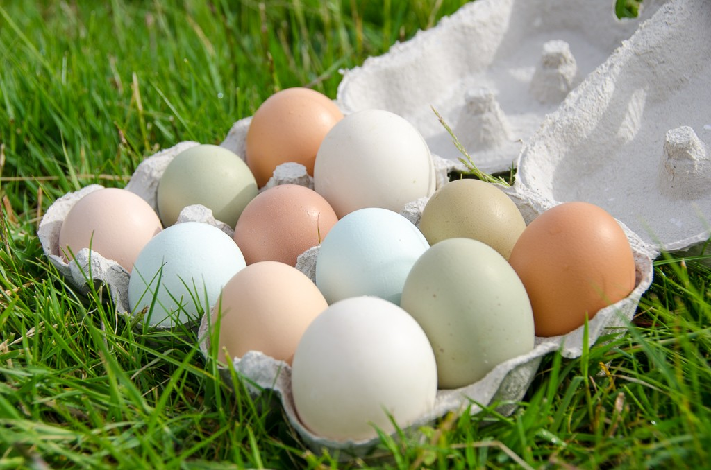 The different coloured eggs produced by our hens