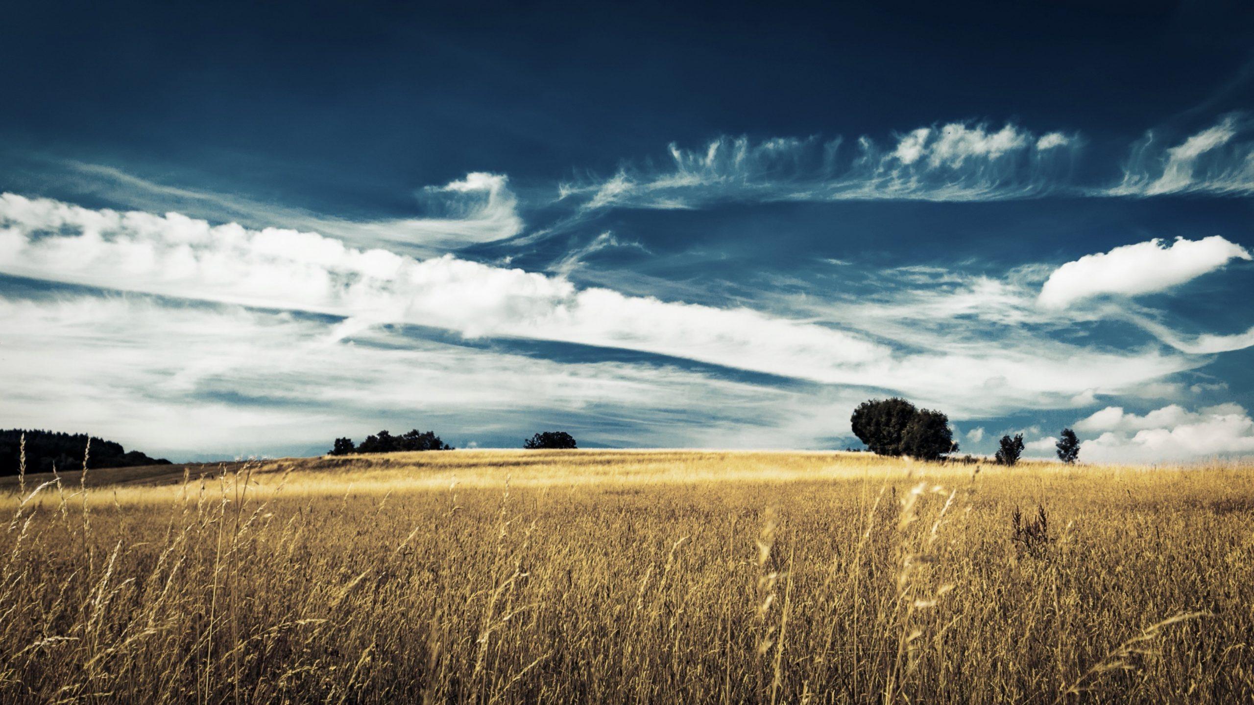 FF201909-landscape-2487890