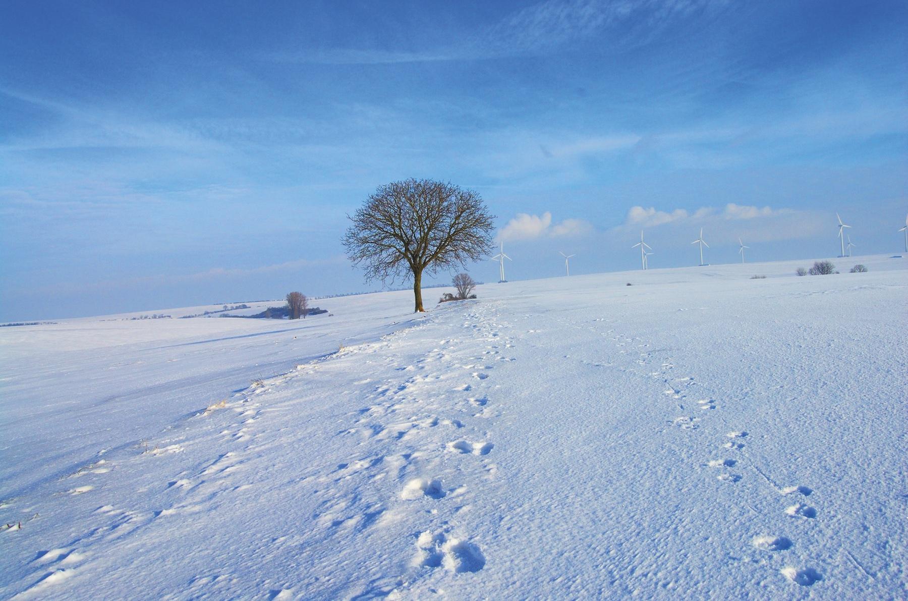 snow-59141