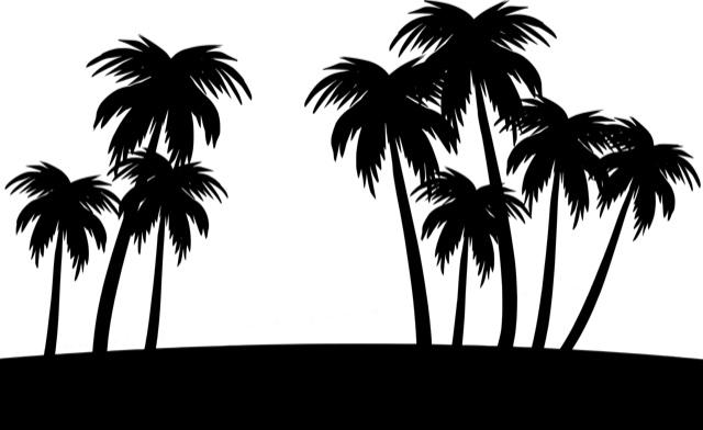 palm-4549612