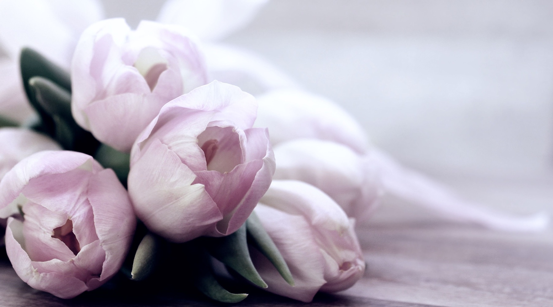 tulips-4072214