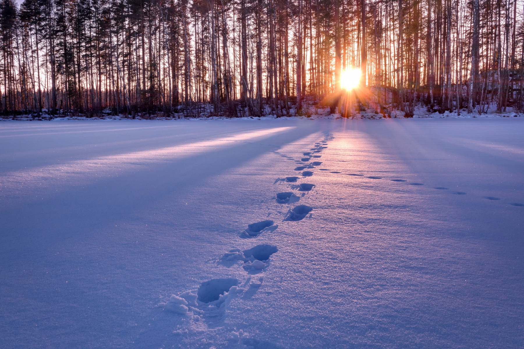71226241 – footprints in snow leading towards sunset hdr shot