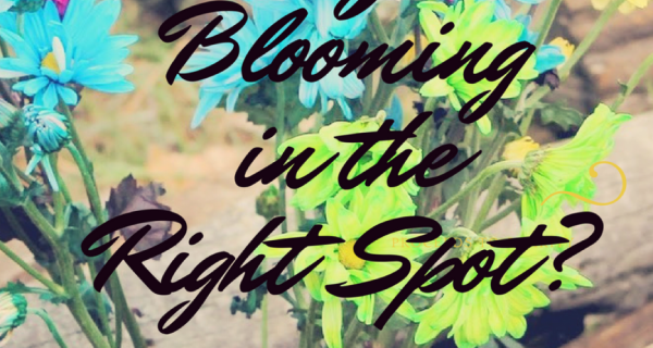 Are You Blooming In The Right Spot?