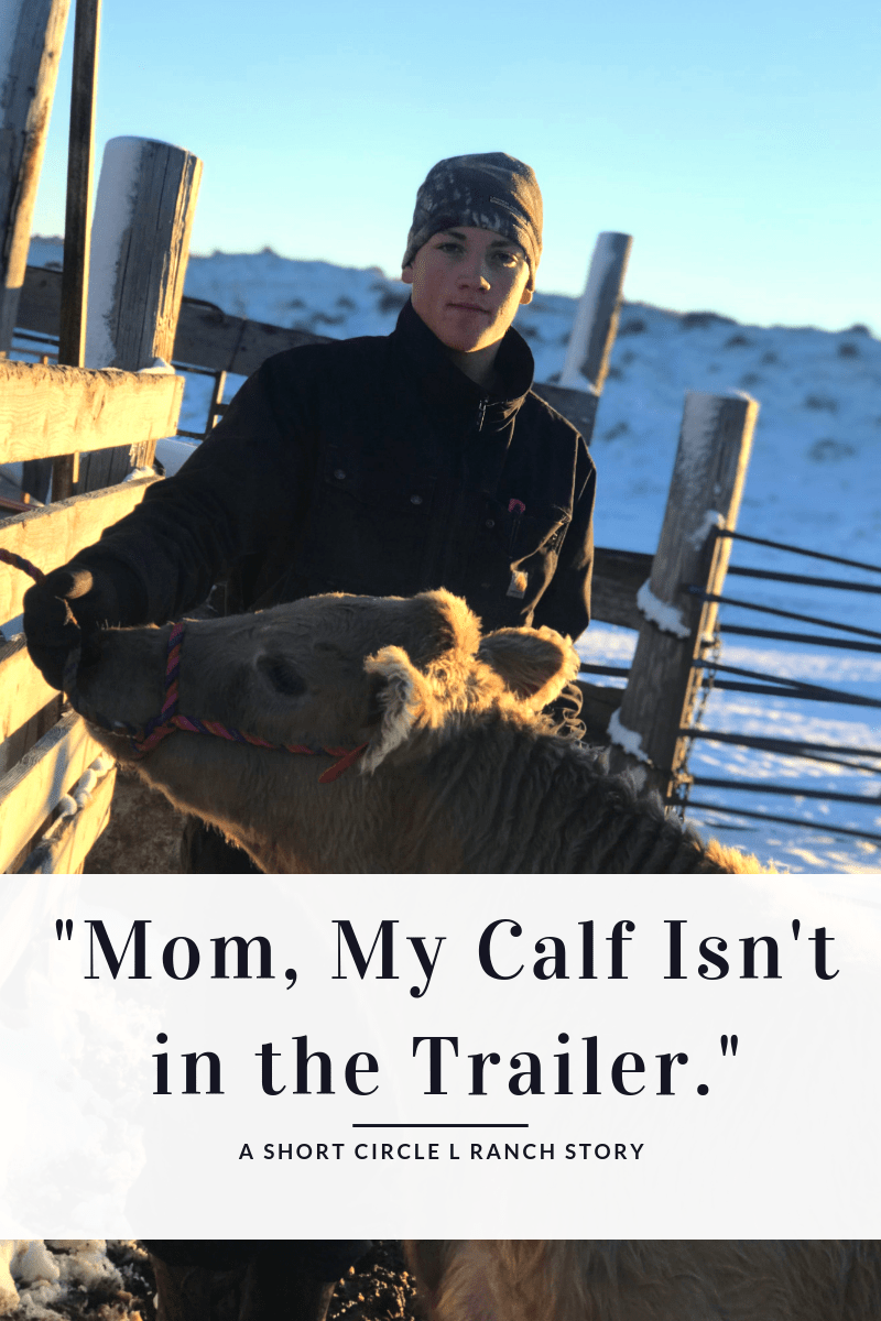 Mom, My Calf Isn't In The Trailer.