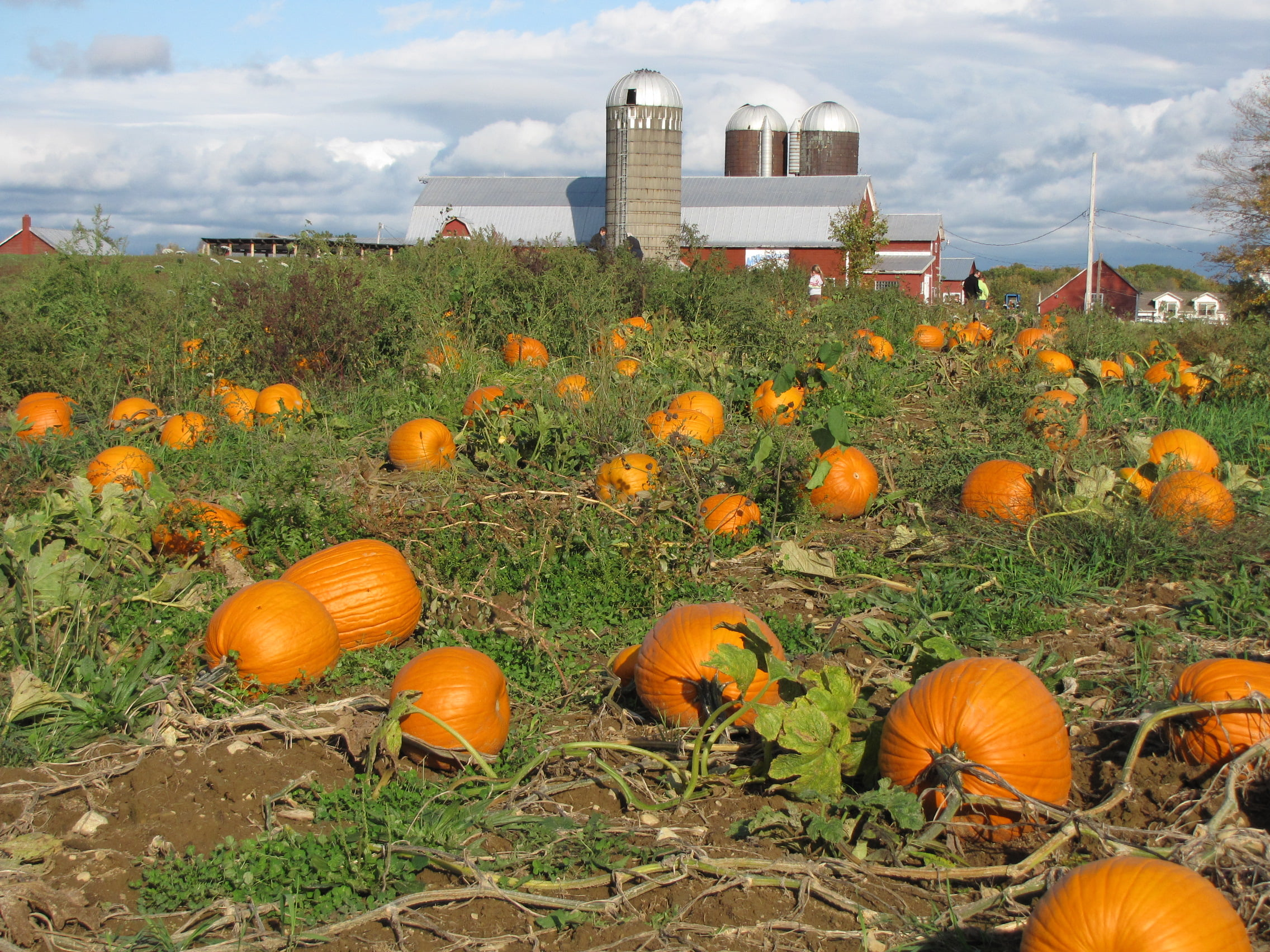 Pumpkin Patches 60411 Area