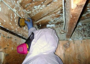 Attic Mold Removal Elmwood Park