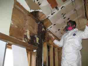 Mold and Mildew in Lake Forest IL