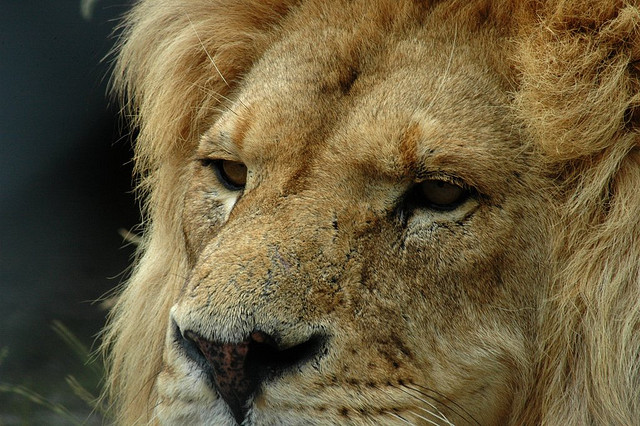 Consultants, Be a LinkedIn LION