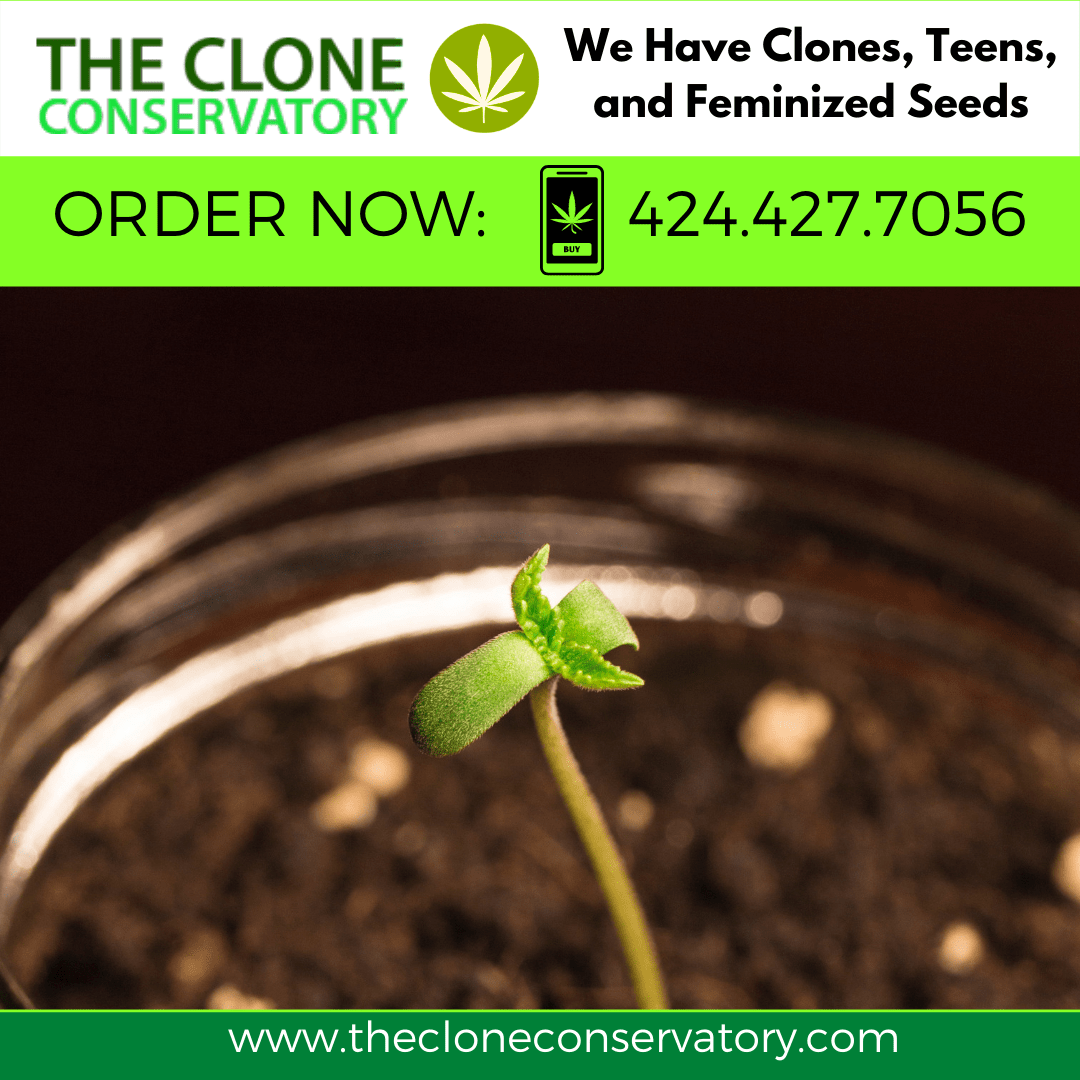 Weed Direct Planting