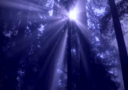 Aftermovie - Tomorrowland 2008