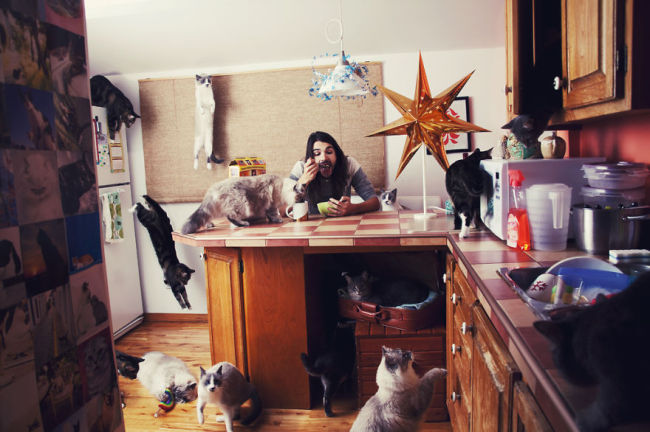 Andreanne-Lupien-cats-photography-5