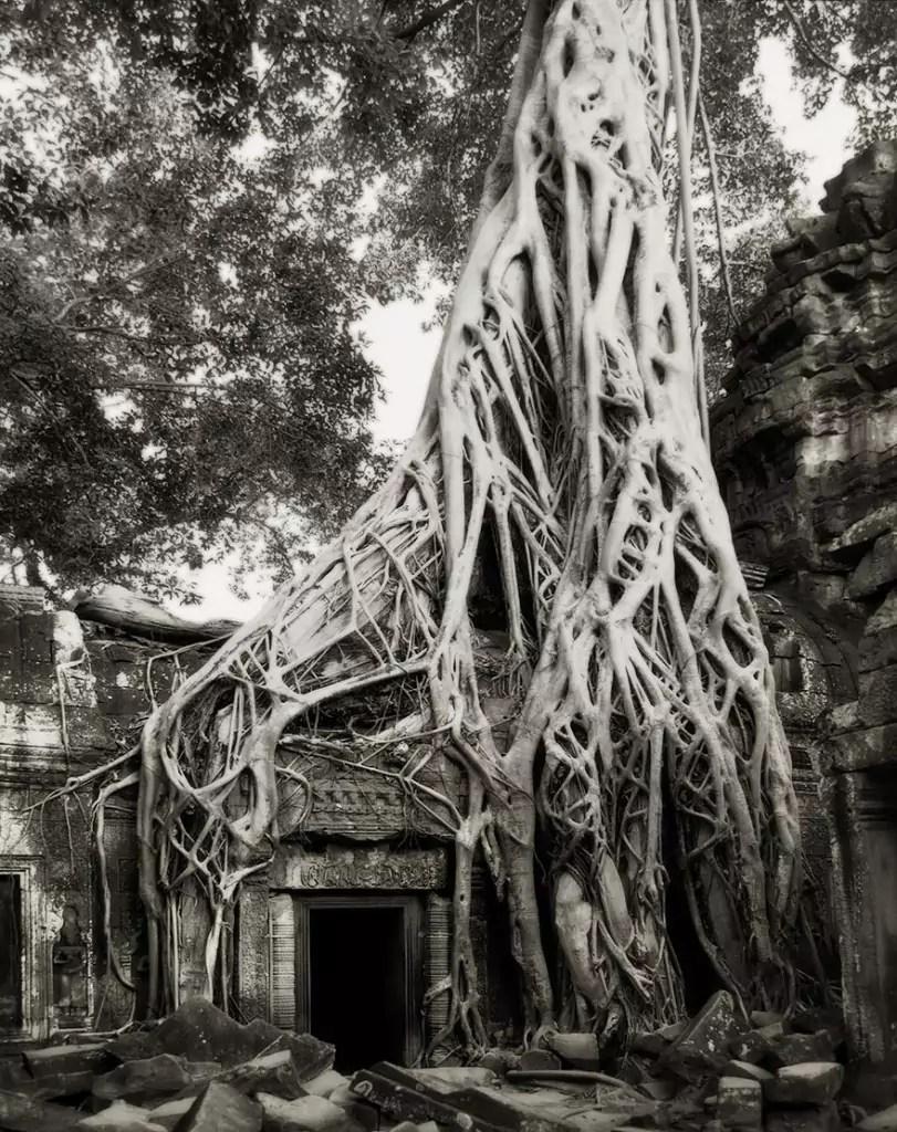 ancient-trees-beth-moon-13-811x1024