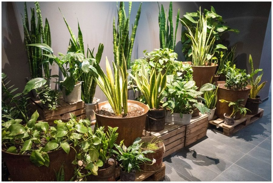 Staying at Ruby Marie; interior plants