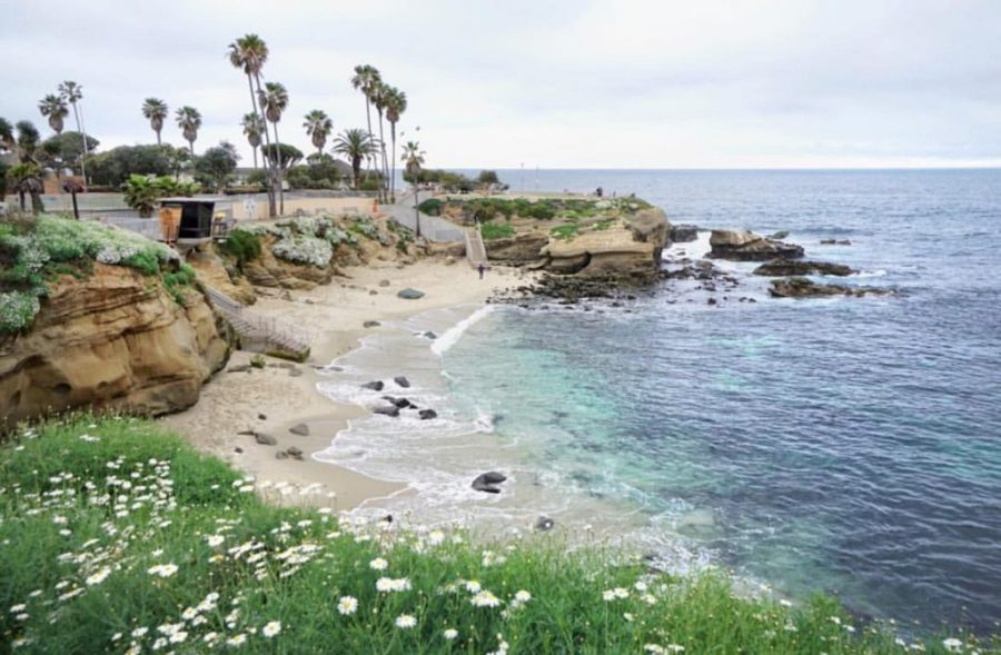 travel and reduce your carbon footprint; san diego la jolla beach