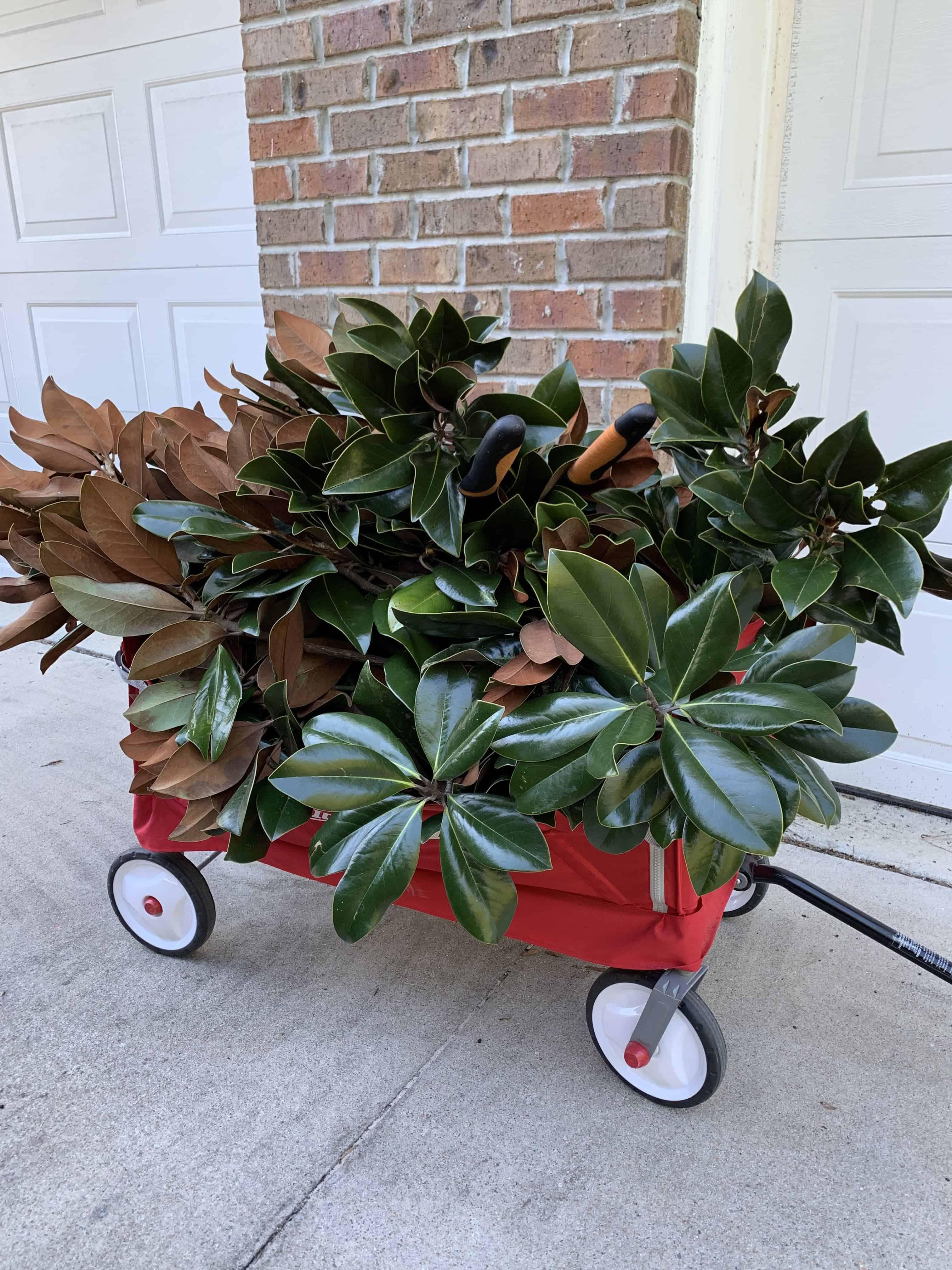 magnolia cuttings in red wagon