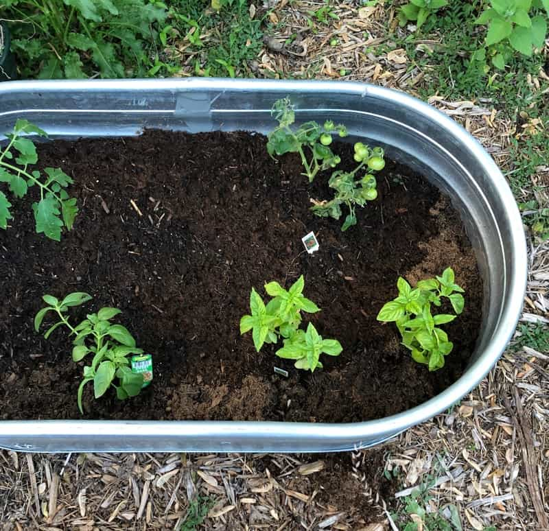 Jennifer Rizzo Raised Bed Stock Tank Galvanized Planter
