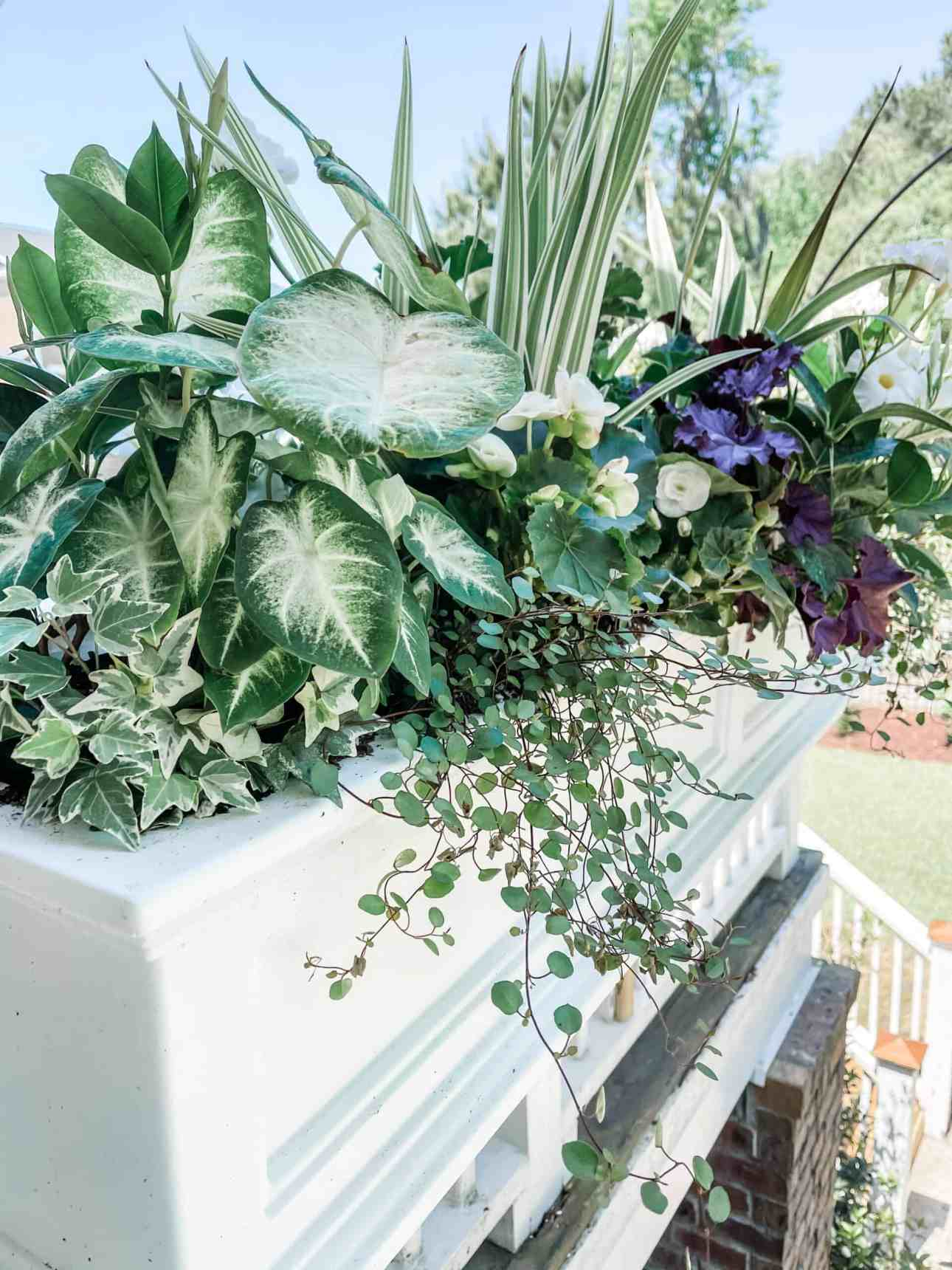 Shade and partial shade loving plants for window boxes.