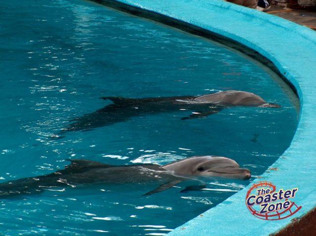 delfinsfm2