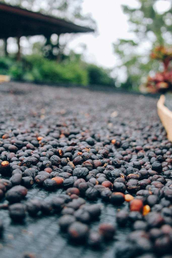 Thrive-Farmers-Coffee-53