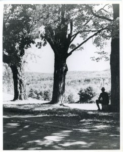 Large maple trees with man sitting