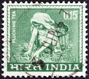 Woman plucking tea (India 1965)