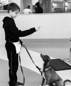 Andrew George is teaching his dog Alpha to sit. Andrew shows patience and skill in working with his shy dog.