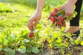 food growing