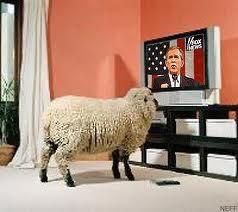 television and sheep