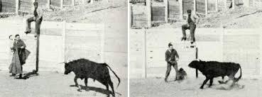 delgado-bull-fight