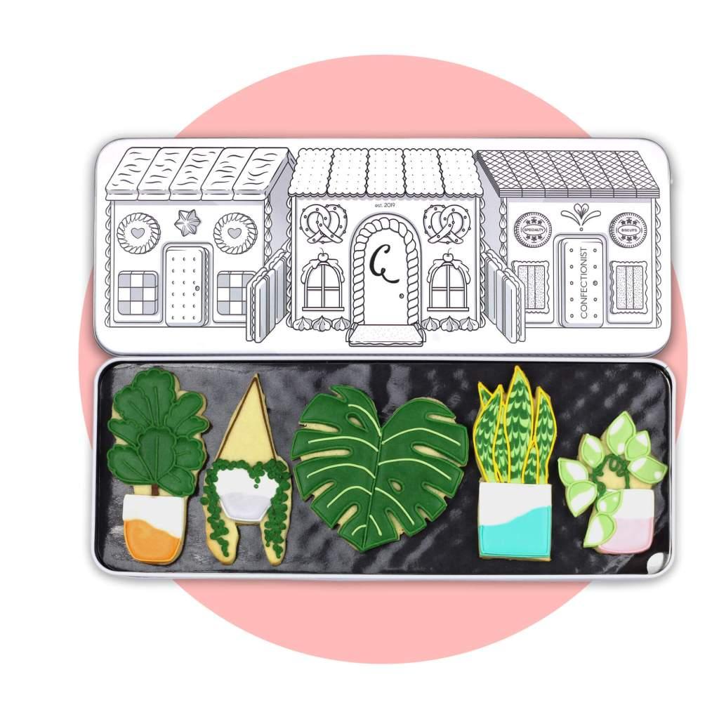 Indoor Plant Biscuit Set with pink background
