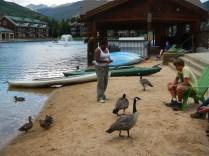 More Duck Feeding