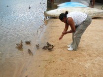 Hand Feeding Ducks