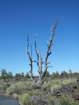 Barren Tree Craters of the Moon National Park, Idaho