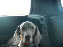 Zoe in Car