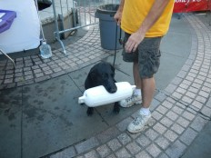 Water Doggie
