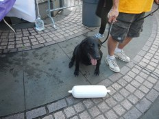 Water Doggie 2