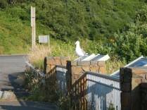 seagull getting closer