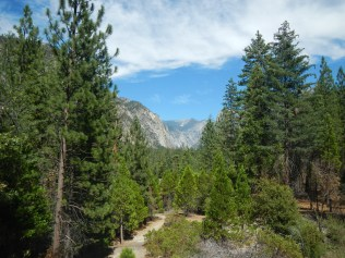 Kings Canyon National Park - View from bottom 2