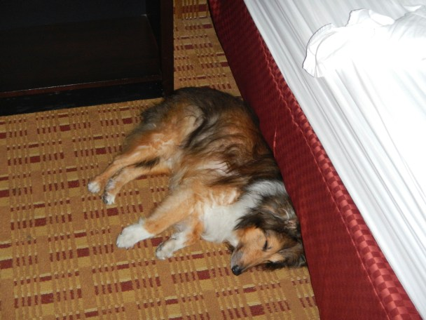Pet Friendly Travel Tips help your dog sleep comfy in his room.